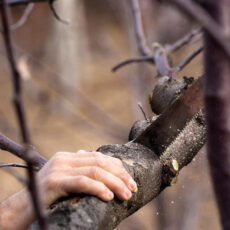 Rückschnitt von Bäumen und Sträuchern